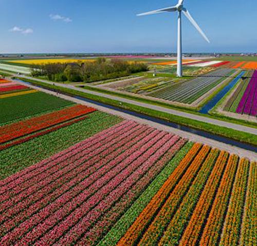 Tulip Fields Tour - Airplane Photos