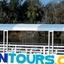 Dolfun Tours