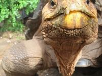 Galapagos Budget Island Hopping