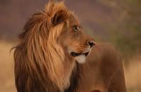 Kanyezi Safaris