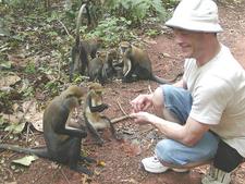 41 Monkeys