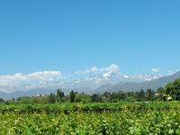 Vineyards At Bodega Nieto Senetiner