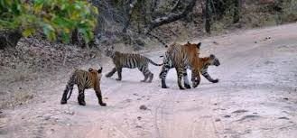Golden Triangle with Wildlife Tour Package Photos