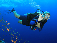 Open Water Course PADI and SSI