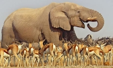 Africa Holiday Tours Wildlife