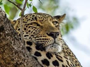 Masai Mara Budget Safari, Tours & Trip Kenya Photos