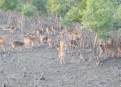 Sundarban Deer Park