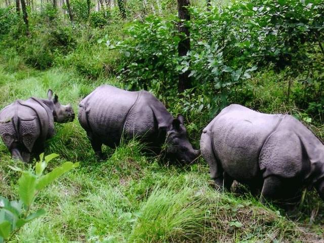Incredible Chitwan Photos