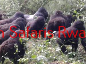 The Gorillas Valentine Escapade Fotos