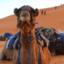 Marrakechdeserttours