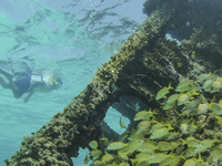 4 Stops Snorkeling Tour in Cancun