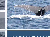 Camiguin Whale Watching Expedition Trip