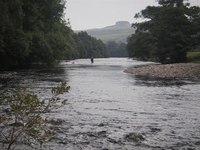 River Tees Wild Trout Fishing