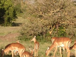 Masai Mara, Lake Nakuru, Samburu & Aberdare Photos
