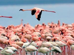 Masai Mara and Lake Nakuru Photos