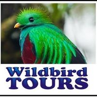 Wildbirdtours