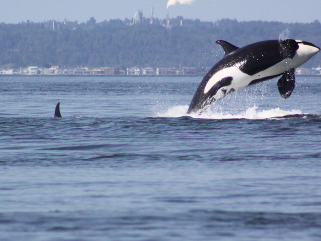 Whale Watching Photos
