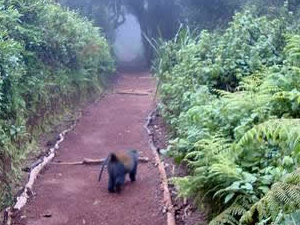 Kilimanjaro Trekking Day Trip Fotos
