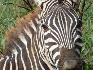 Tarangire National Park Photos