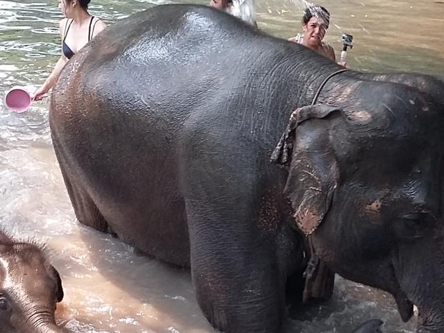 Elephant Sanctuary Photos