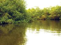 Churute's Mangrove Tour with Cocoa Farm