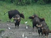 Gorumara National Park 4
