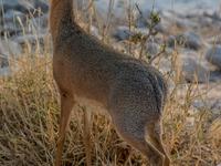 Green Season January Namibian Self-Drive Safari