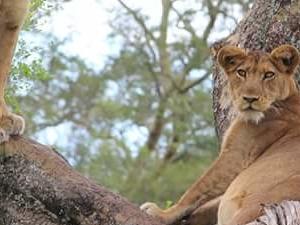 Best of Kenya Fotos