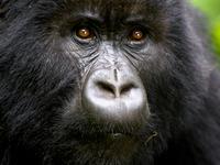 Best of Uganda Natur Reise und Safari