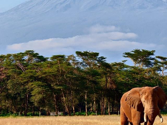 Holiday and Safaris, Uganda and Tanzania Combo Photos