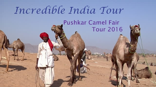 Rajasthan Camel Safari Tour Photos
