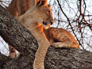 Serengeti Safari Photos