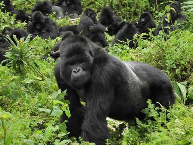 Gorillas and Chimps Trail Expedition Photos