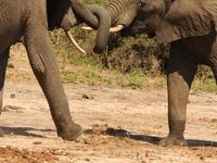 African Safari - The Big 5