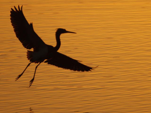 Florida Birds Photo Tour Photos