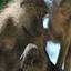 Baboon Family At Lake Manyara 640 480