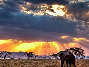 4 Day Tanzania Camping Safari