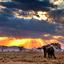 Elephant At Serengeti National Park 640 480