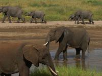 Enjoy Tanzania Camping Safari