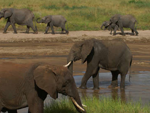 Enjoy Tanzania Camping Safari Photos