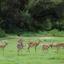 Impalas At Lake Manyara National Park 640 480
