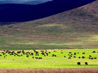 Tanzania Camping Safari Package