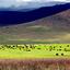 Lush Grasses And Wildlife Inside Ngorongoro Crater 640 480