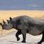 The Rare Black Rhinoceros In Ngorongoro 640 480