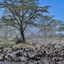 Zebras Around A Watering Hole In The Serengeti 640 480