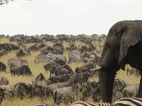 The Serengeti and Ngorongoro 5 Days Safari