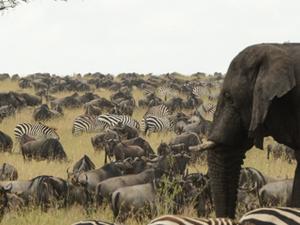 The Serengeti and Ngorongoro 5 Days Safari Photos