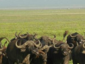 Serengeti Basic Camping Safari
