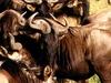 Best of Tanzania Budget Safaris