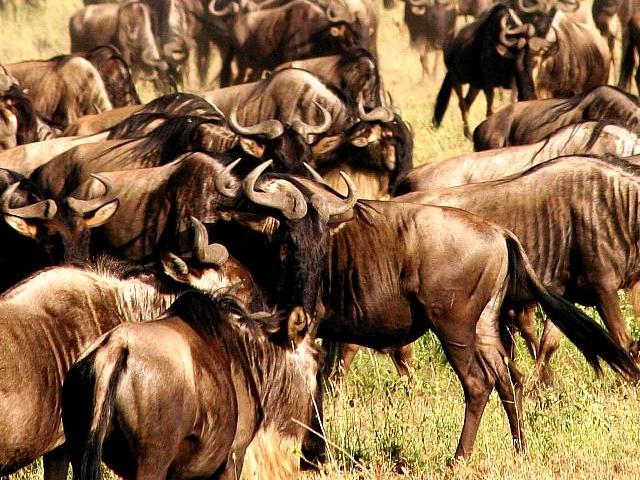 Best of Tanzania Budget Safaris Photos